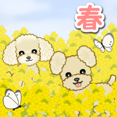[LINEスタンプ] 春のトイプードルズ