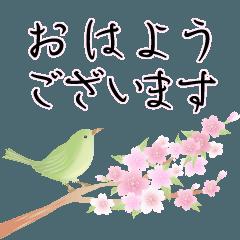 [LINEスタンプ] 桜が背景で舞う!大人の和柄 春のウグイス
