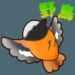 [LINEスタンプ] いろんな野鳥スタンプ