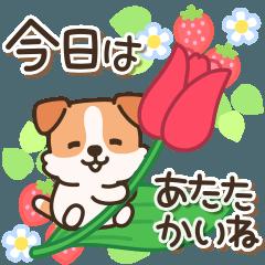 [LINEスタンプ] 陽気なジャックわんこ4(春)