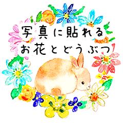 [LINEスタンプ] 写真に貼れる♪お花とどうぶつ