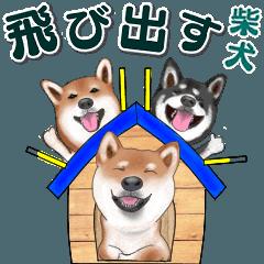 [LINEスタンプ] 飛び出す柴犬(敬語編)